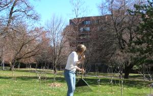 orchard 14