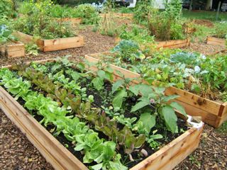 East Central Community Council Is Community Gardening